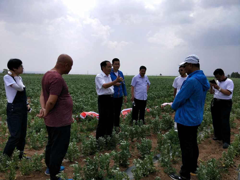 商都县甜菜种子纸带直播、蚕豆产业精准扶贫现场培训会