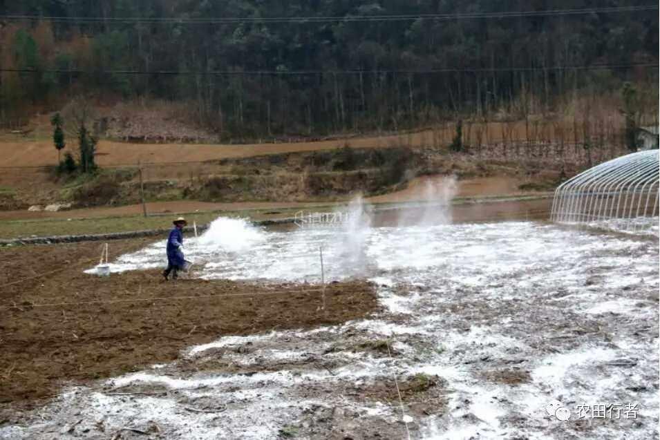 用生石灰调理土壤需慎!