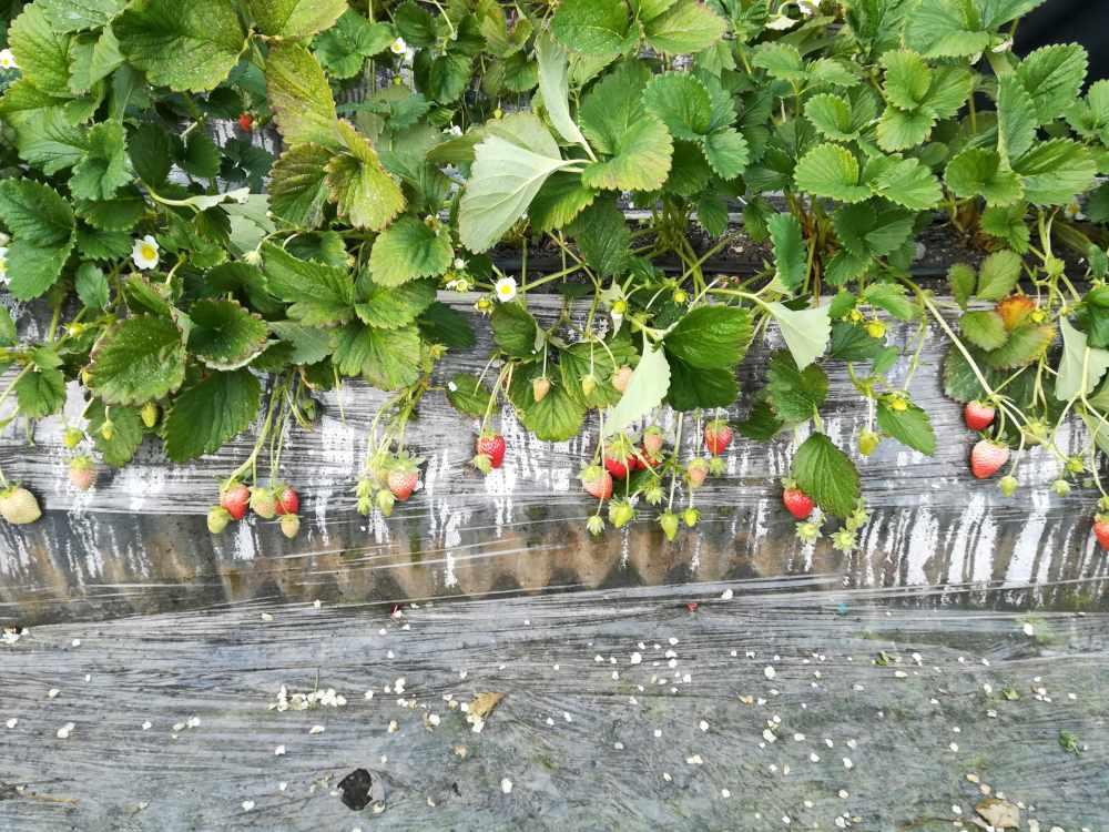 观摩固阳农业示范园