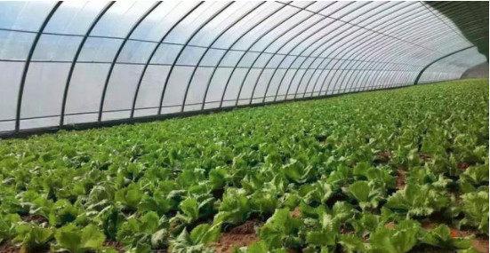 未来蔬菜行业前景