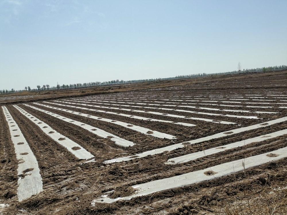 向日葵扩行降密提质增效栽培技术
