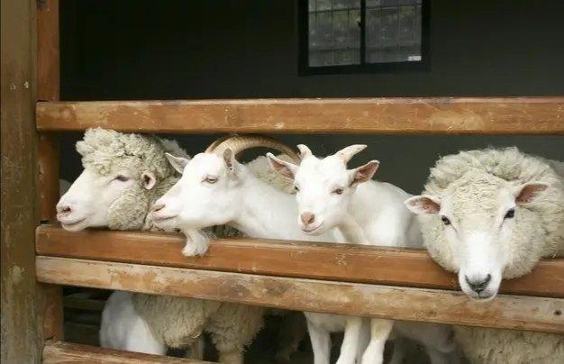 引起羊腹泻的常见传染病和寄生虫病