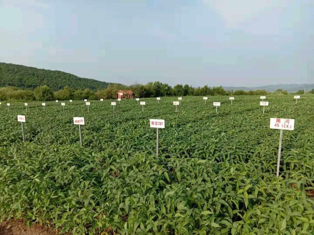 国家极早熟大豆品种区试,生试工作进入汇总阶段