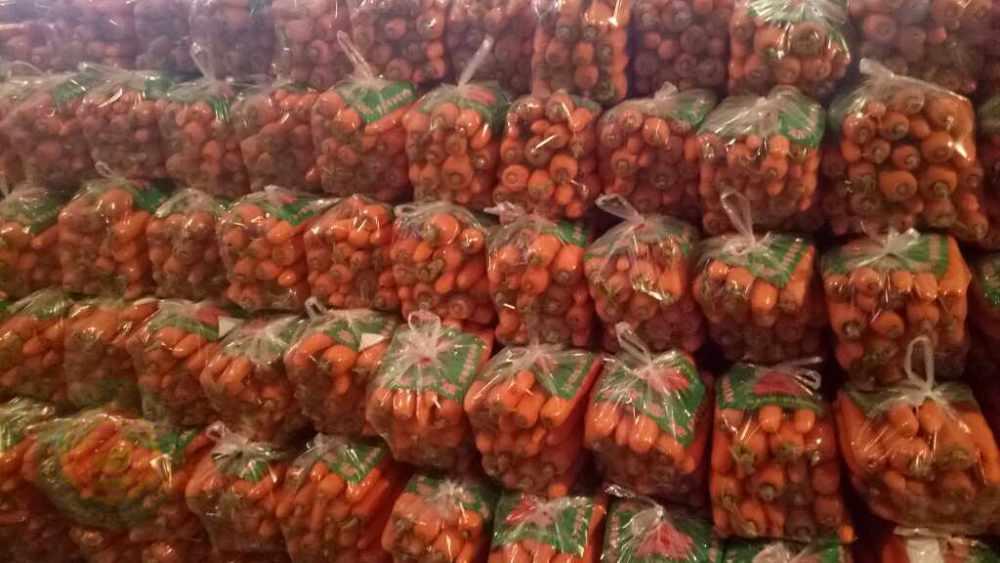 胡萝卜喜获丰收