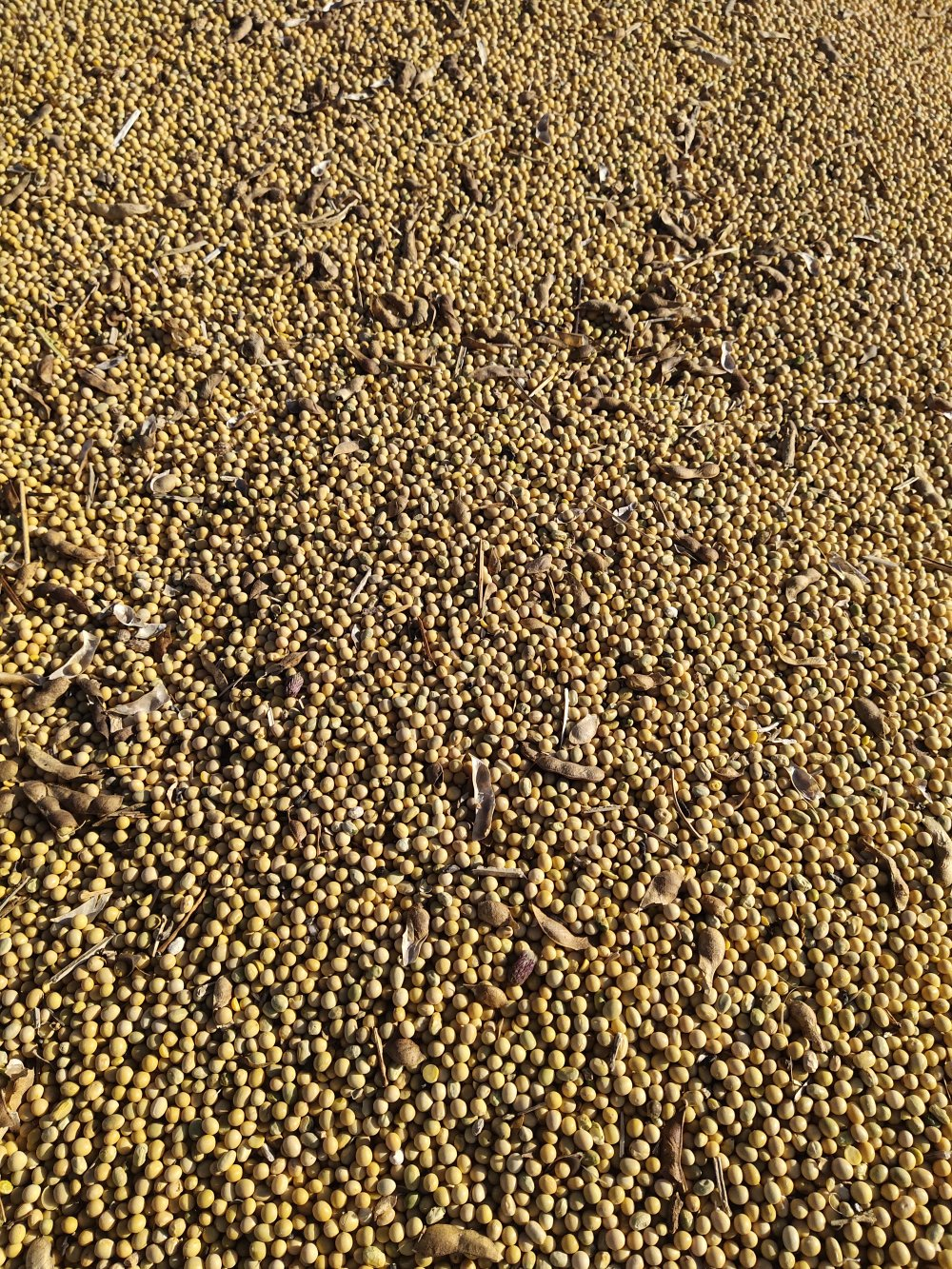 出售优质高蛋白大豆