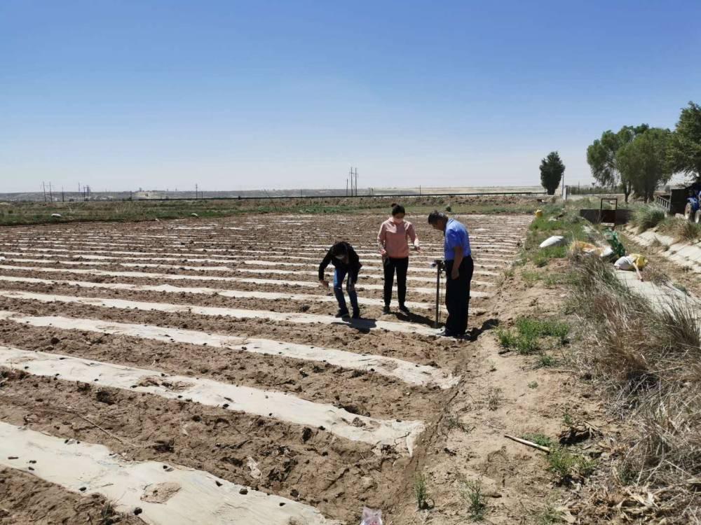 市种子管理站科技特派员深入派驻地指导新品种展示田种植与苗期管理