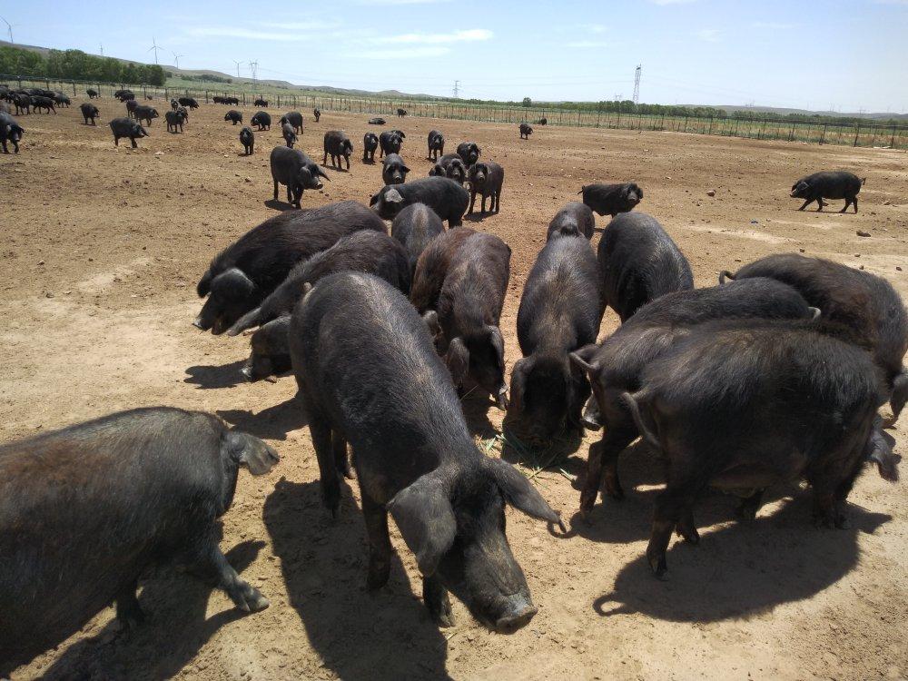 指导猪场防疫
