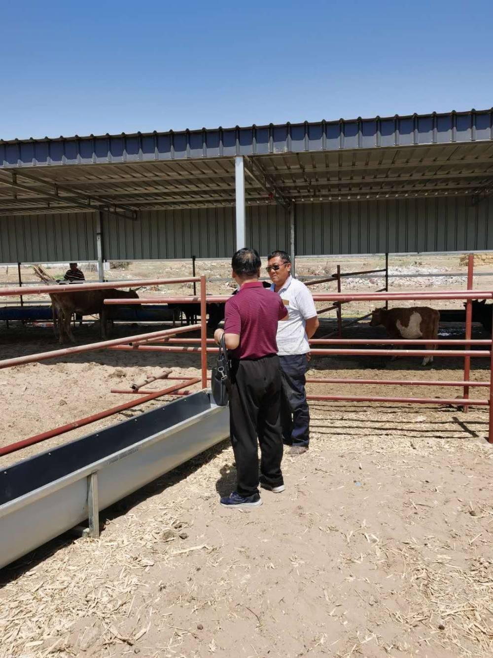 """星火科技""""12396""""畜牧专家指导草原倒场到农区肉牛的养殖生产"""